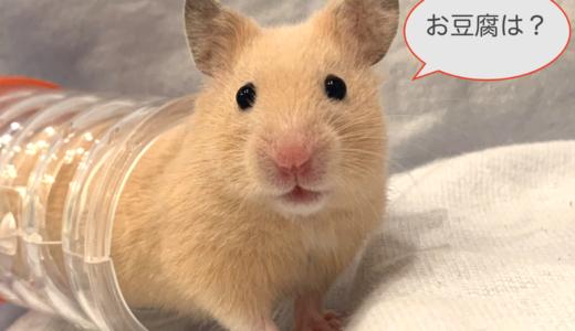 ハムスターへの豆腐の与え方は?オススメ乾燥豆腐も紹介!
