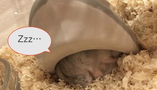 ハムスターがずっと寝てる。病気の可能性は?睡眠時間とサイクルを紹介!