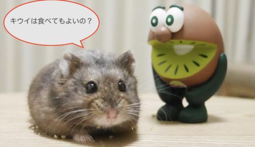 ハムスターはキウイが食べれるの?適量や注意点は?おすすめドライキウイも紹介!