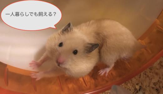 ハムスターが一人暮らしにオススメの7つの理由!注意点や飼育用品も紹介!