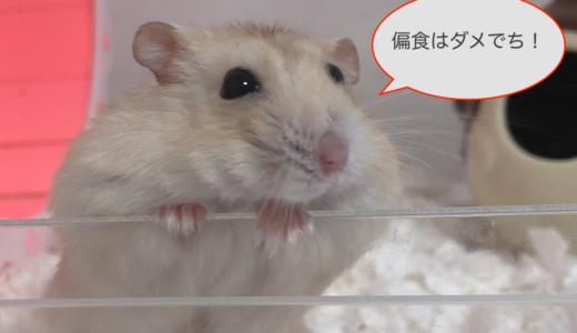 【ハムスターの偏食】ペレットを食べてくれない!なおすにはどうするの?