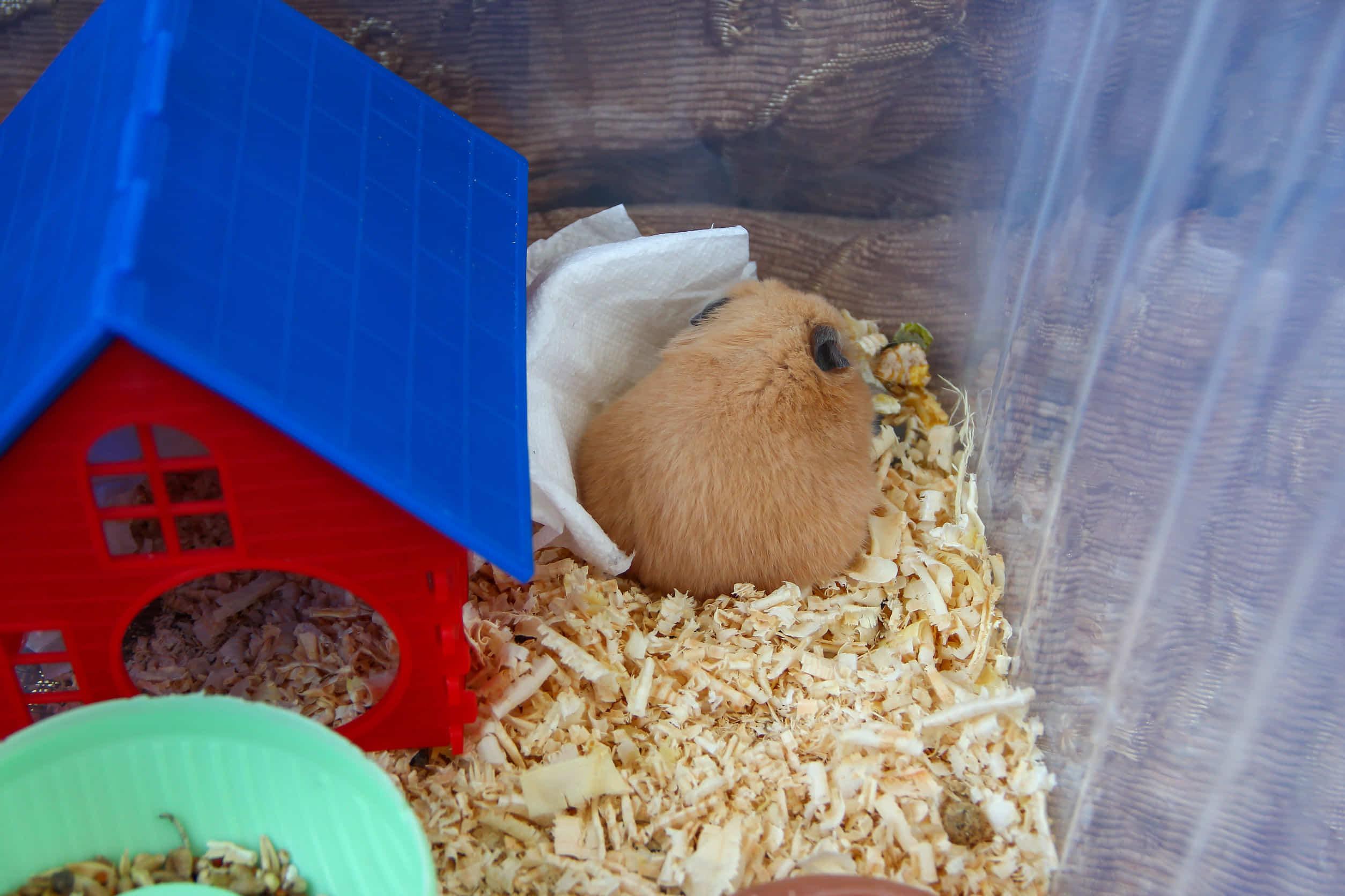 ハムスターがずっと寝ている。睡眠時間とサイクルを紹介!お世話をするタイミングは?