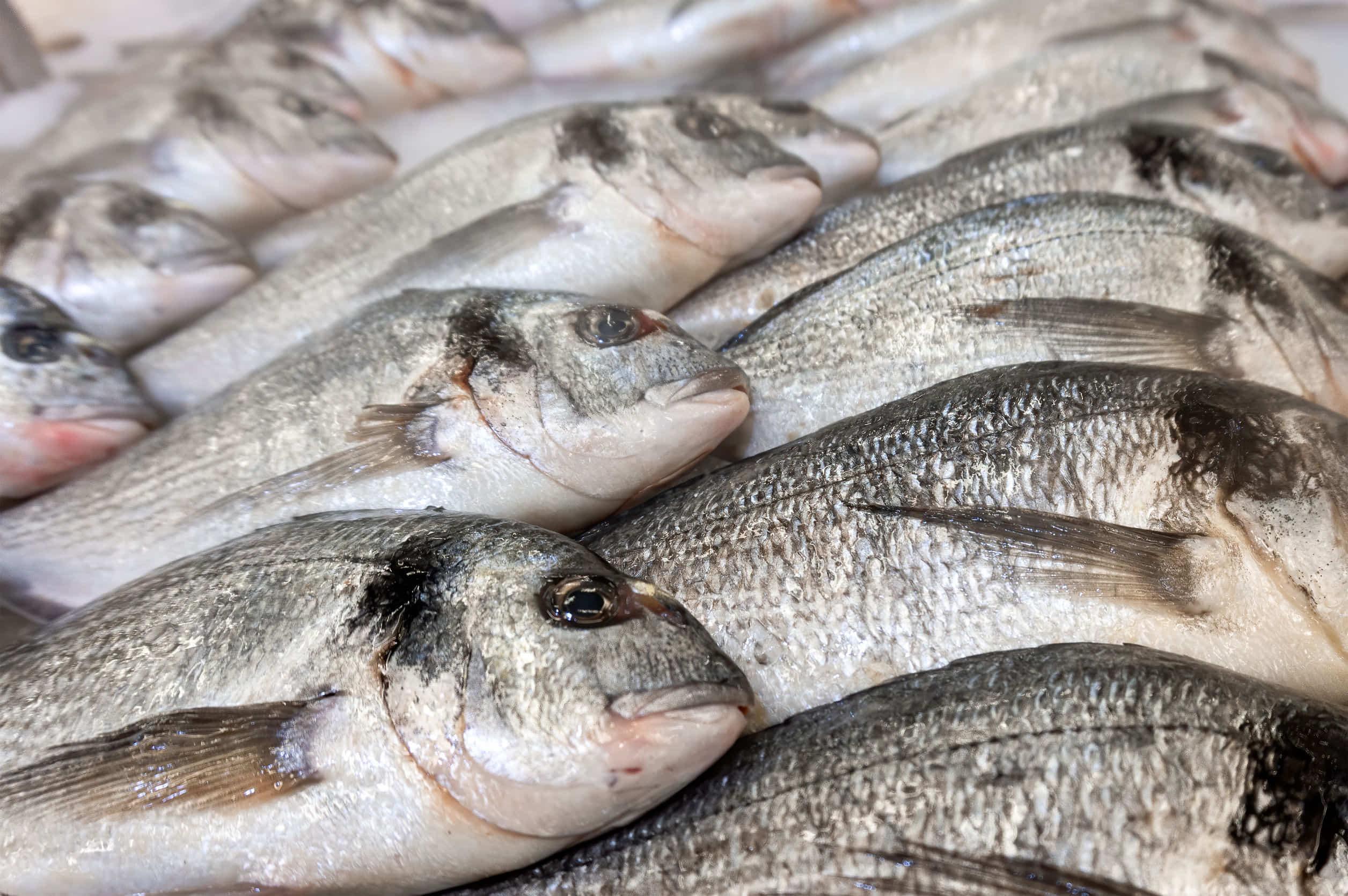 ハムスターは魚や魚肉ソーセージを食べれるの?タンパク質を上手に与えよう!