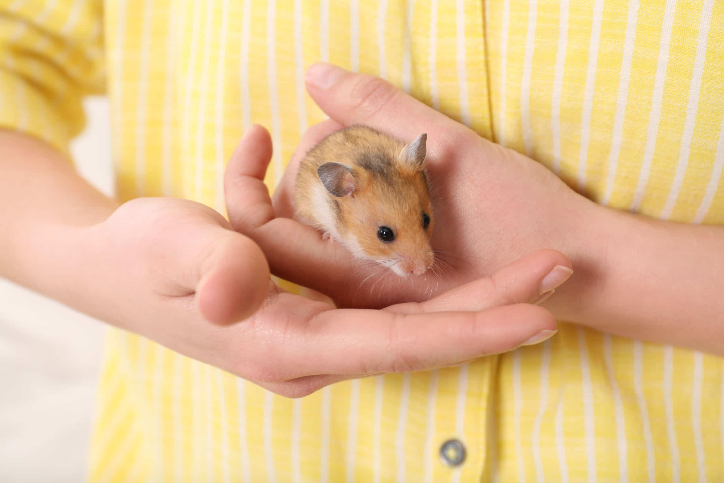 ハムスターの爪切りは必要?伸びすぎたときの正しい対処は?飼育環境が大切!