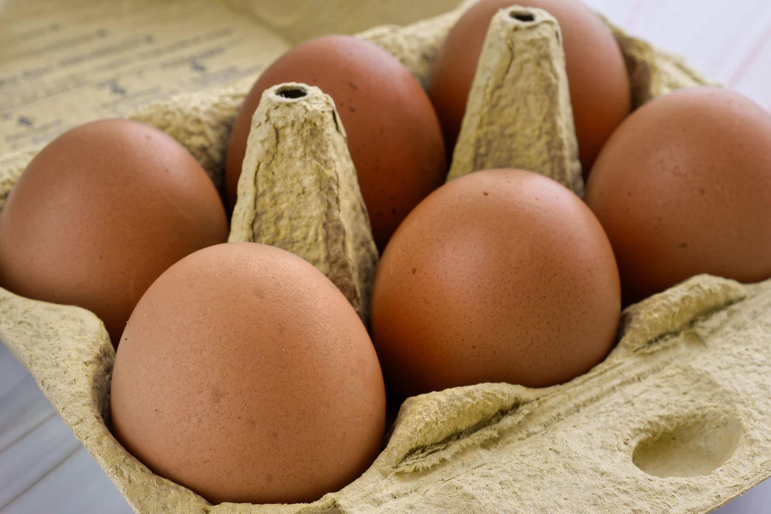 ハムスターへの卵の与え方や注意点を紹介!白身や黄身・生や茹での違いは?